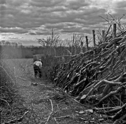 Matthew Bozworth hedge laying above Cobbs wood