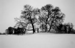 The Horse chestnut mound