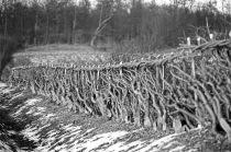 Bullock hedge