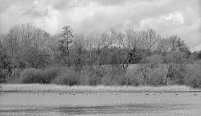 lake folly 3
