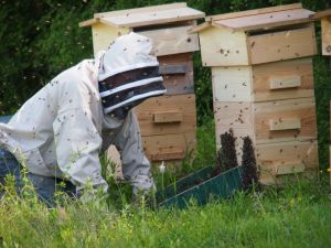 Wimpoles own Honey Bees