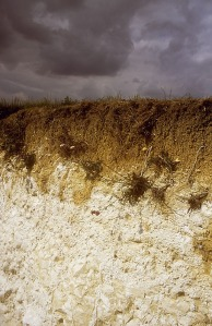 rendzina_soils_on_upper_chalk