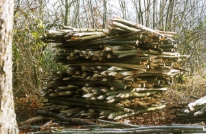 Hedge laying stakes