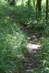 Badger run