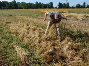 Shane gleaning