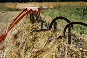 Revet wheat