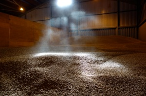 The commercial barley in the barn