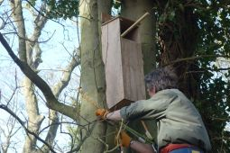 Up goes the tawny owl box