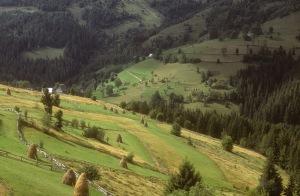 A mosaic of habitats