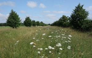 Some of the hay meadow left long for the wildlife