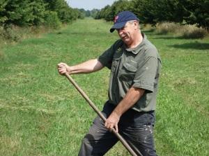 Greenn haying or just horsing around