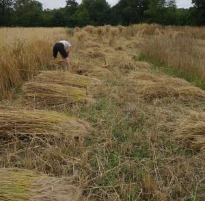 Binding the sheaves