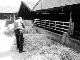 Thrashing the barley