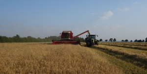 Home farm combining their barley in top twenty