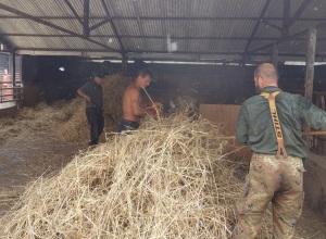 Thrashing the Nottingham barley with a mini thrashing machine