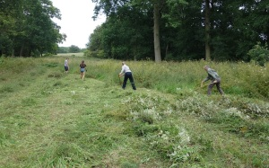 Mowing the meadowsweet