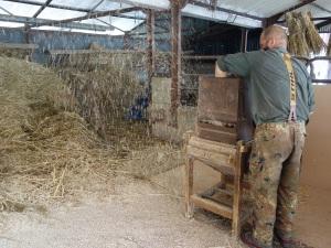 Winnowing the rivet wheat