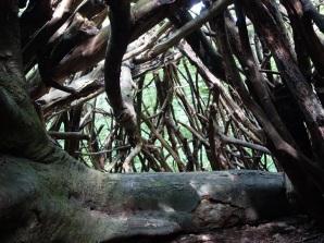 Inside the den