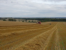 Harvesting the organic oats