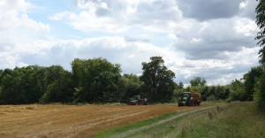 Collecting the bales before it rained