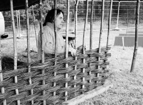 Willow hurdle
