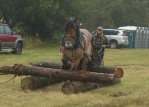 Horse logging demostration