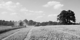 Simon Parrish contracted in to harvest the last of the wheat at Valley farm