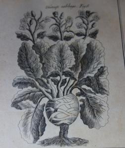 A turnip!