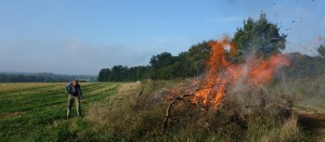 Burning last years lop and top