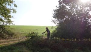 Hedge laying on Cobbs wood farm