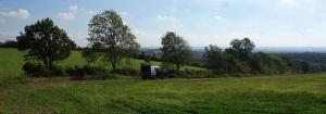 Hedge laying on the parish boundary