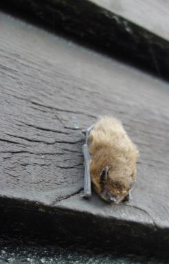Our friendly bat