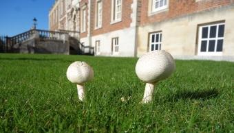 Golf balls or fungi?!