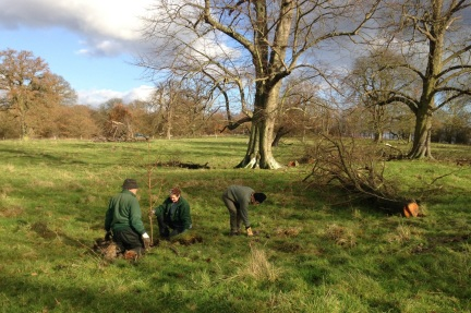 Cambridge National Trust Volunteers planting