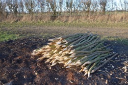 Making stakes for the hedge laying competition on the 7th February