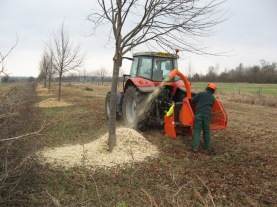 Lifting the lime trees 2008