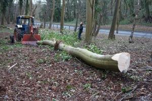 Winching the big timber