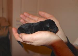 Missie's puppy 1 of 7