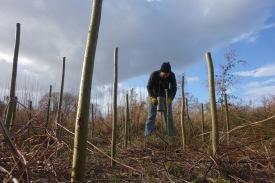 Planting sticks!