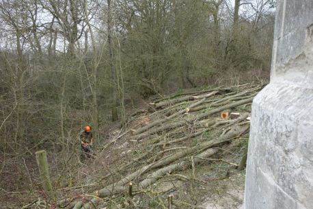 Felling the elm by the Folly