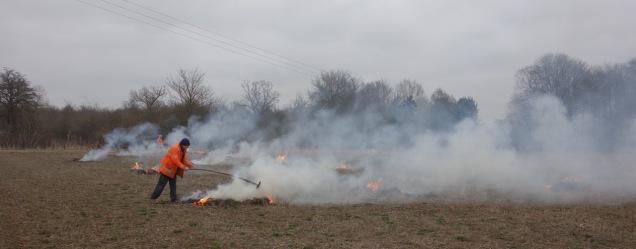 Burning the old stooks
