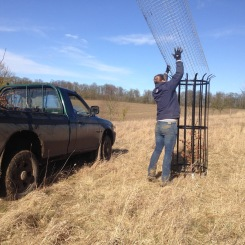 Replacing dead trees in Folly Field