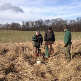 Planting oaks at Valley farm