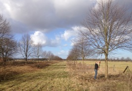 Pruning the lime trees