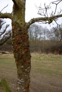 Green woodpecker damage