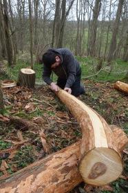 Striping the inner bark