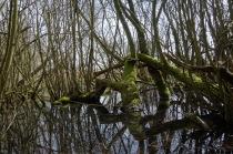 Natural mirrors of life