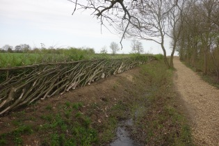 How the hedge grows