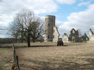 About 6 years ago we cleared the folly area of scrub