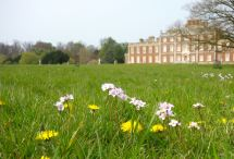 Dandelions and milkmaids